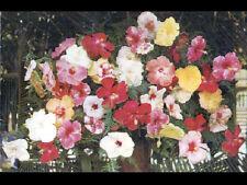 TAHITI (POLYNESIE) Fleurs locales HIBISCUS / carte postale
