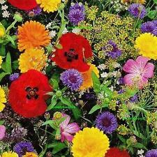 BLÜTENTEPPICH - über 40 Arten Sommerblumen - Blumensamen - Blumenwiese 500 SAMEN