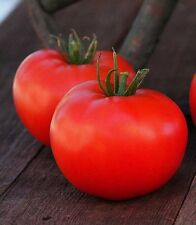 Organic Rutgers Tomato Seed 20ct Excellent flavor USA Produced