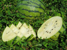 Melon White Water Fruit 30 PCS Mixed Varieties Plants Home Garden Planting