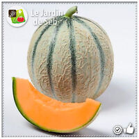 50 Graines de Melon Charentais - SEB-0056