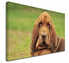More details for blood hound dog x-large 30