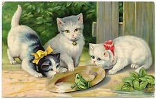 chats .cats. grenouille.frog.
