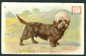 1910 DANDIE DINMONT Dog Card CHURCH & DWIGHT Soda J14 Large G Muss Arnolt DANDY