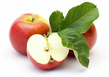 🍎Sweetest & Delicious Apple Tree 🍎10-Finest Seeds🍎Hardy Variety🍎UK  Seller🍎