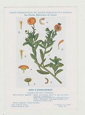 FICHE N°36 PLANTE MEDICINALE/COMITE INTERMINISTERIEL-/Ed. AUZOUX/SOUCI DOUBLE