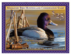 #RW88  2021 Federal Duck Stamp (Sheet Stamp)  - MNH (After June 25th 2021)