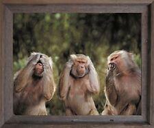Monkeys Hear No Evil See No Evil Speak No Evil Barnwood Framed Art Print Picture