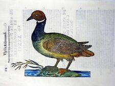 1637 Ulisse ALDROVANDI - WILD DUCK - fine LARGE FOLIO Woodcuts 17th C