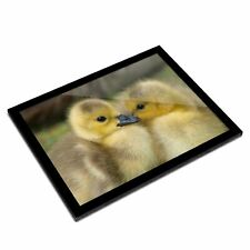 A3 Glass Frame - Canadian Gosling Chick Art Gift #14143