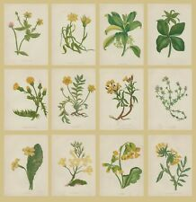 SET OF 12x ORIGINAL VICTORIAN 1867 ANNE PRATT WILD FLOWER CHROMOLITHOGRAPHS 11