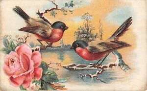 Pretty Birds Perched by Pink Rose & River Scene on 1911 Postcard
