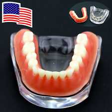 Dental Implant Model Inferior Typodont Teeth Precision Gold Bar USA Shipping