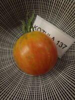 Kozula 137 Tomate Tomato 10+ Samen - Saatgut - Seeds - Gemüsesamen