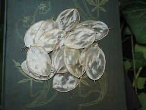 Fairy Money for Wish Magic - Honesty - Spellwork, Offerings - Witchcraft, Pagan
