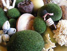 New Patchouli Forest Path (Nag Champa Type) Aromatherapy Fragrance Oil--4ml.