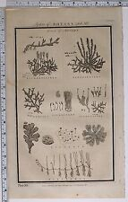 1788 ORIGINAL PRINT BOTANY MOSSES LYCOPODIOIDES LICHENES PILULARIA