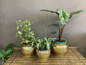 NEW Round Brass floral planter - Large