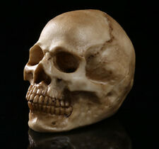 1pc new Human Skull Replica Resin Model Medical Realistic 11x7x8.5cm FREE mini
