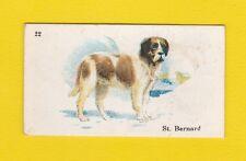 DOGS  -  B.A.T.  CO.  LTD.  -  SCARCE  DOG  CARD  -  ST.  BERNARD  -  1913