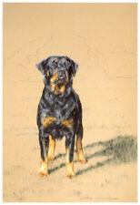 "ROTTWEILER ROTTY ROTTIE DOG FINE ART LIMITED EDITION PRINT - ""On Guard"""