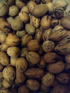 4 LBS Mixed variety Pecans in the shell (Natives)