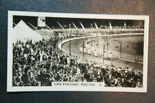 White City Greyhound Racing   Original Vintage Action Photocard Card  VGC