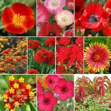 Red Head - Exclusive Red Wildflower Seed Mix10 Species of Wildflower 100 Seeds