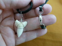 """(S930-53B) 15/16"""" Modern BULL SHARK lower tooth silver wired Pendant necklace"""