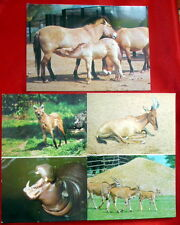 set of 8 SOVIET UNION old USSR VINTAGE ART PRINT russian postcards ANIMALS