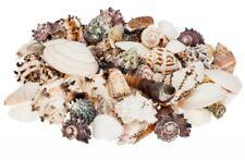 NaDeco® Muschelmix large 1kg | Bastelmuscheln | Dekomuscheln | Deko Muschel | De