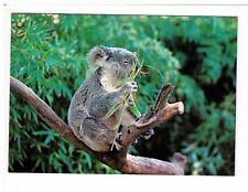 Postcard: Koala - Australian Native Bear, Australia