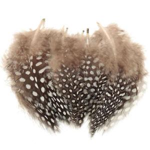 50x Vogelfedern Perlhuhn Perlhühner Gefieder Federn Millinery Dekoration Dekore