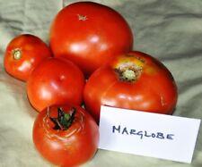 250 graines TOMATE ANCIENNE DES USA MARGLOBE (Lycopersicum es.)K108 TOMATO SEEDS