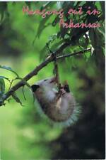 """""""Hanging Out in Arkansas"""" Postcard - Opossum - Unposted"""