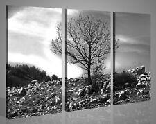 Quadri moderni stampe canvas bianco nero SOLITARIO immagini natura alberi 130x90