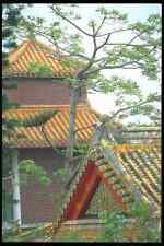 279039 Temple Roof Tops A4 Photo Print