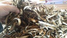 1 ounce Dried Devil's Club Root Bark - High Potency, Only Bark!