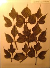 Creeper Leaves Real Pressed Flower Craft Embellishments