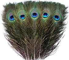 Pfauenfedern im Pack zu 5 Stück 25-30cm