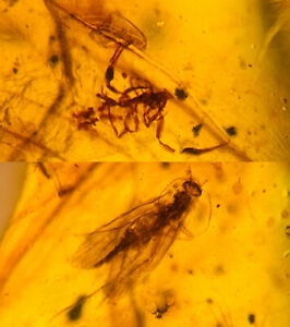 Scorpion&phryganeid Burmite Myanmar Burmese Amber insect fossil dinosaur age