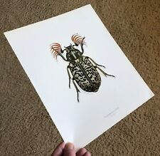 Durin Print Fuller Scarab Beetle/Beetles Insects/Bugs