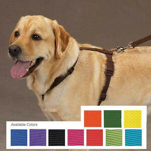Nylon Dog Harness Pet 11 colors 4 sizes Adjustable Easy to Use Zack & Zoey Pet