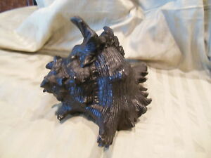 Large Stunning Cast Bronze ( NOT Resin)  Statuary of  Detailed Sea Shell