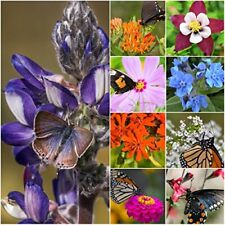Package of 30,000 Seeds Bird and Butterfly Wildflower Mixture 100% Pure Live