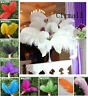 10PCS Natural Ostrich Feathers Fit Stage Home Wedding Party Crafts DIY Decor