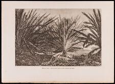 1880 - Gravure Marais de l'Atrato (Colombie) (Canal du Panama, Darien)