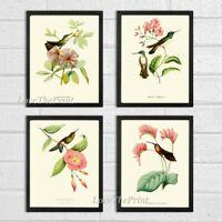 Unframed Hummingbird Wall Art Print Set 4 Antique Vintage Pink Flower Home Decor