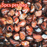 5Pcs Natural Banded Agate Madagascar,Xlarge Tumbled Beautiful Patterns PLJH