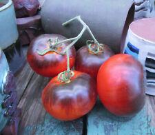 Indigo Apple Tomato (2019) : Blue Antho Salad Tomato : 20 Seeds